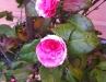 Negovane biljke princeze Jelisavete
