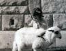 Kneginjica Jelisaveta sa svojim jagnjetom